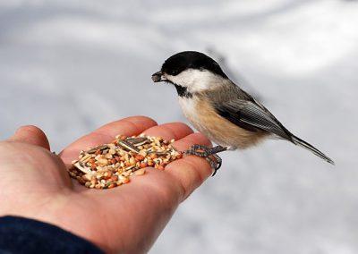 bird-feeding